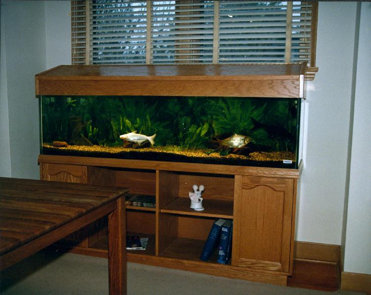 Aqualease Calgary S Premier Custom Aquarium Lease